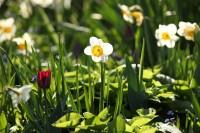 VanDusen-Botanical-Garden-Flowers-2.jpg