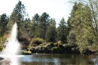 VanDusen-Botanical-Garden-Lake.jpg