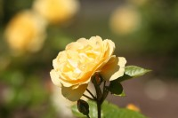 queen-elizabeth-park-flower.jpg