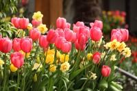 queen-elizabeth-park-flowers-2.jpg