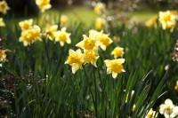 VanDusen-Botanical-Garden-Flowers.jpg